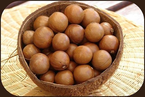 Macadamia: Hạt ngon nhất, đắt nhất - 2