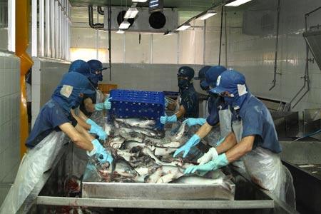 Khẩn cấp cứu ngành cá tra - 1