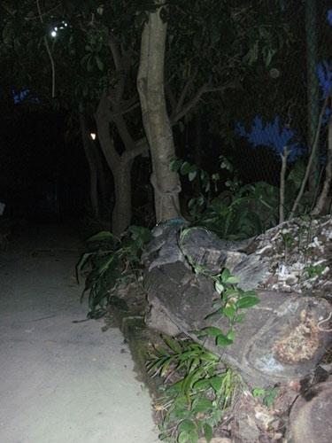 Độc chiêu: Dùng cá sấu trông cây sưa - 3