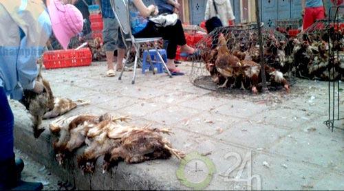 Gà siêu rẻ: Thú y thừa nhận có gà chết - 1