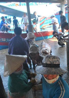 Đi chợ... cá mập - 6