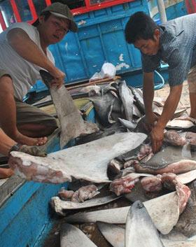 Đi chợ... cá mập - 8