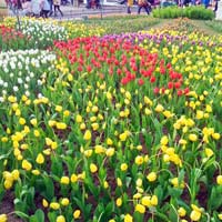 Công viên Hàn Quốc - Thiên đường của tình yêu