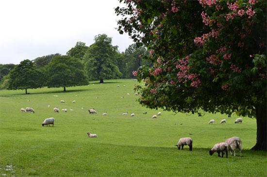 Đắm mình vào không gian nước Anh tại Chatsworth House - 11