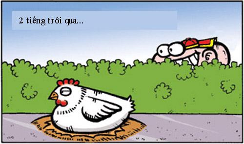 Chuyện con gà triệt sản - 2