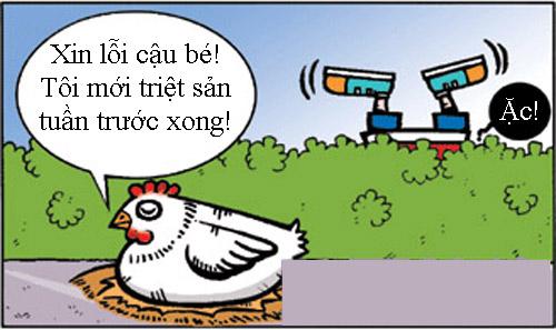 Chuyện con gà triệt sản - 4