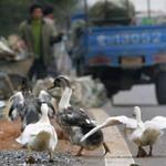 Tin tức trong ngày - TQ: Cúm gia cầm biến thể, 2 người chết
