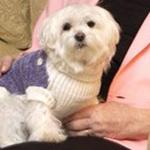 Tin tức trong ngày - Belarus: Chó được thừa kế gần 1 triệu USD