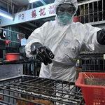 Sức khỏe đời sống - Cúm A/H7N9: Không lây từ người sang người