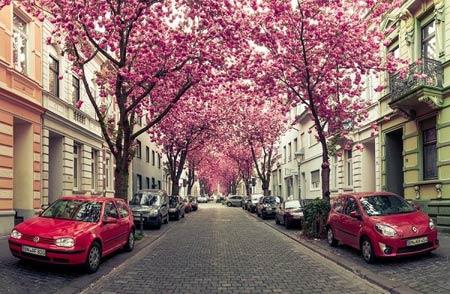 Những con đường tình yêu đẹp ngỡ ngàng trên thế giới - 4