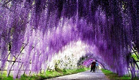 Những con đường tình yêu đẹp ngỡ ngàng trên thế giới - 5