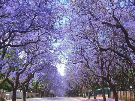 Những con đường tình yêu đẹp ngỡ ngàng trên thế giới - 12