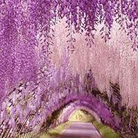 Những con đường tình yêu đẹp ngỡ ngàng trên thế giới