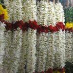 Du lịch - Say trong hương nhài ở Chennai, Ấn Độ