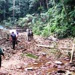 Tin tức trong ngày - Vụ giết 5 phu trầm: Vây ráp rừng Ma