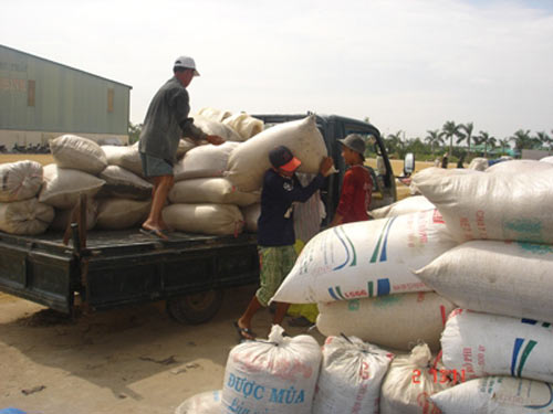 DN xuất khẩu gạo vật vã cạnh tranh giá rẻ - 1