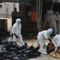 HN: Ráo riết chống cúm A/H7N9 gây chết người