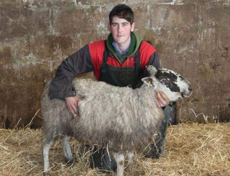 Cừu sống sót sau 11 ngày chôn vùi dưới tuyết - 4