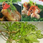 Ẩm thực - Đinh lăng: món ăn ngon, bài thuốc hay