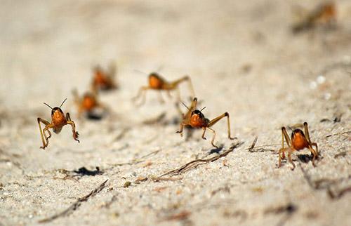 Ảnh đẹp: Loài nhện mới to như mặt người - 10