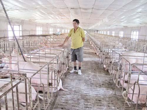 Người chăn nuôi đối mặt với phá sản - 1