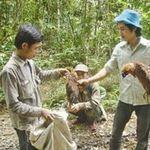 Kiếp phu trầm: Sống nơi rừng thẳm