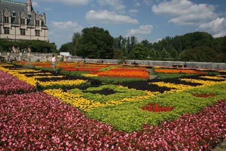 Mơ màng sắc hương lễ hội hoa Biltmore - 1
