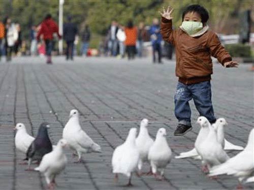 TQ: Đã có thuốc thử và thuốc điều trị H7N9 - 1