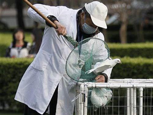 TQ: Đã có thuốc thử và thuốc điều trị H7N9 - 3