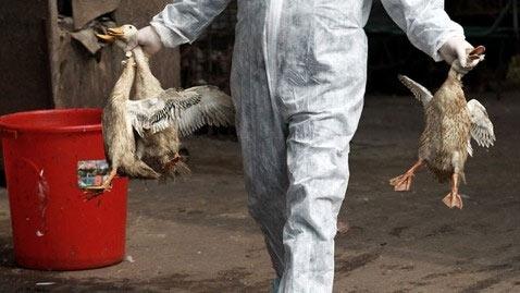Nhiễm H7N9, bị chẩn đoán nhầm viêm phổi - 2