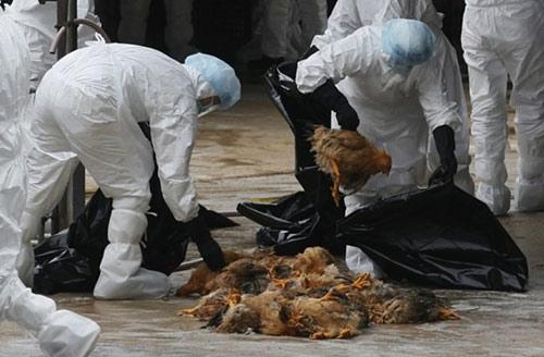 VN: Xuất hiện ca tử vong do cúm A/H5N1 - 1