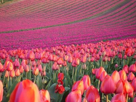 Những thiên đường hoa đẹp ngất ngây - 3