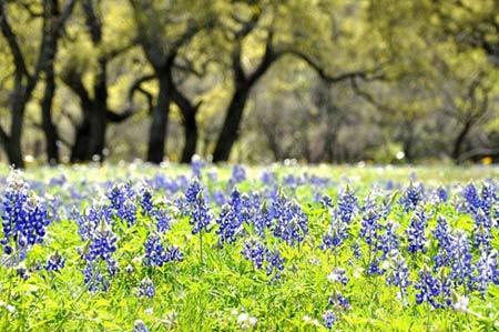 Những thiên đường hoa đẹp ngất ngây - 6