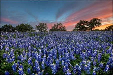 Những thiên đường hoa đẹp ngất ngây - 7