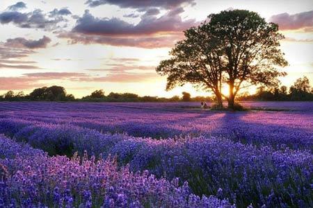 Những thiên đường hoa đẹp ngất ngây - 10