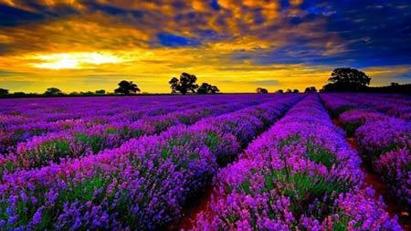 Những thiên đường hoa đẹp ngất ngây - 11