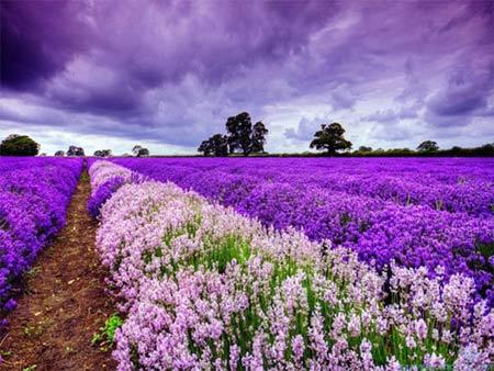 Những thiên đường hoa đẹp ngất ngây - 12