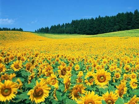 Những thiên đường hoa đẹp ngất ngây - 13