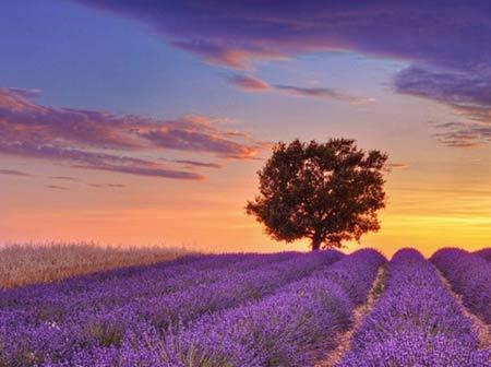 Những thiên đường hoa đẹp ngất ngây - 9