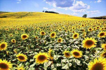 Những thiên đường hoa đẹp ngất ngây - 15