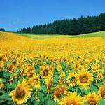 Du lịch - Những thiên đường hoa đẹp ngất ngây