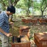 Thị trường - Tiêu dùng - Việt Nam được xuất mật ong tươi vào EU