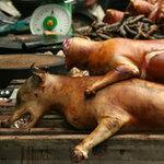 Tin tức trong ngày - Khách Tây rùng mình với thịt chó Việt