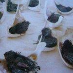 Thị trường - Tiêu dùng - Chim yến chết hàng loạt vì cúm H5N1