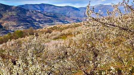 Vòng quanh thế giới tận hưởng sắc hoa anh đào - 8