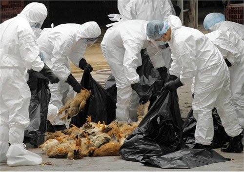 Dịch cúm A/H7N9: Còn quá ít thông tin - 1