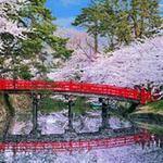 Điểm du lịch - Vòng quanh thế giới tận hưởng sắc hoa anh đào