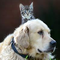 Ảnh đẹp: Mèo con trèo lên đầu chó