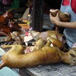 Tin tức trong ngày - Ăn thịt chó ảnh hưởng gì đến đạo đức?