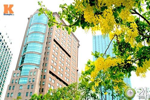 Đến Sài Gòn ngắm hoa hoàng yến - 4